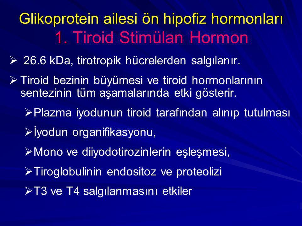 Glikoprotein ailesi ön hipofiz hormonları 1. Tiroid Stimülan Hormon