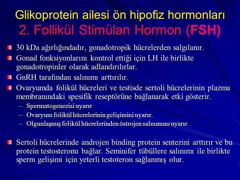 Glikoprotein ailesi ön hipofiz hormonları 2