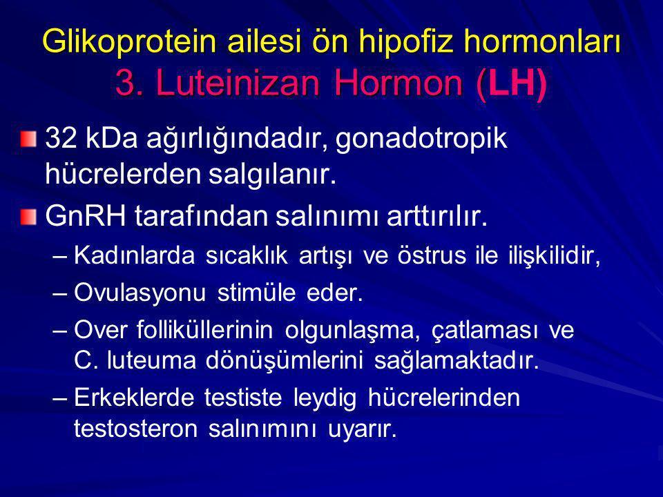 Glikoprotein ailesi ön hipofiz hormonları 3. Luteinizan Hormon (LH)