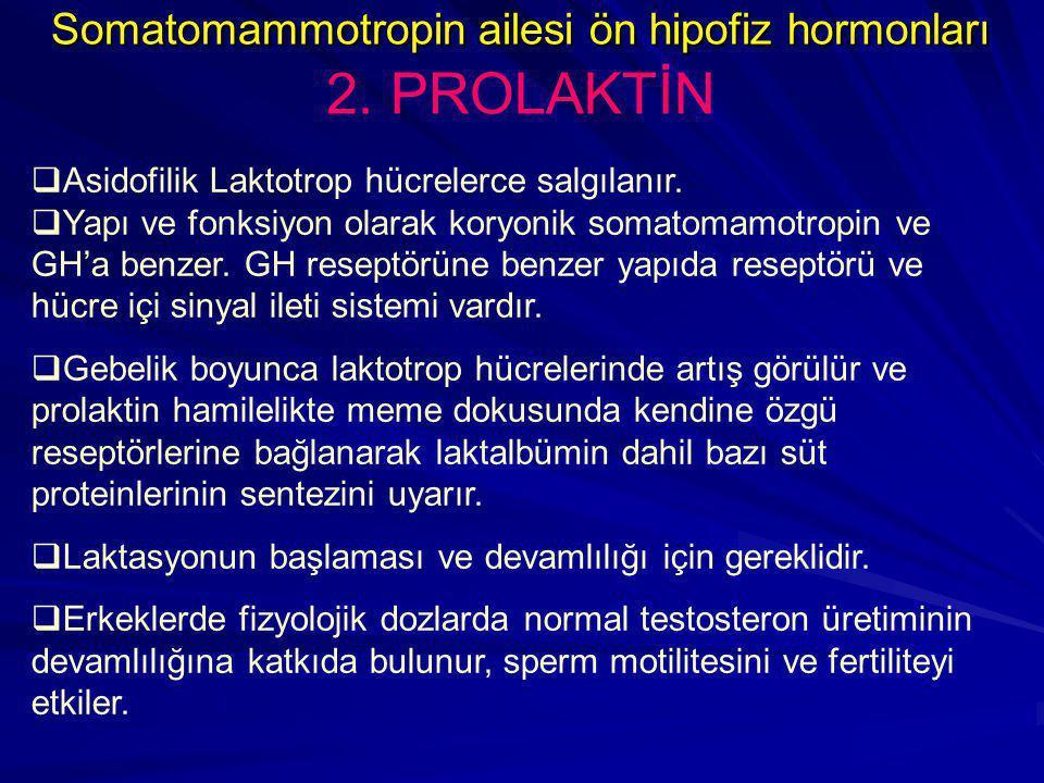 Somatomammotropin ailesi ön hipofiz hormonları 2. PROLAKTİN