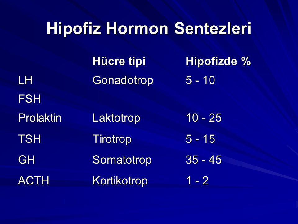 Hipofiz Hormon Sentezleri