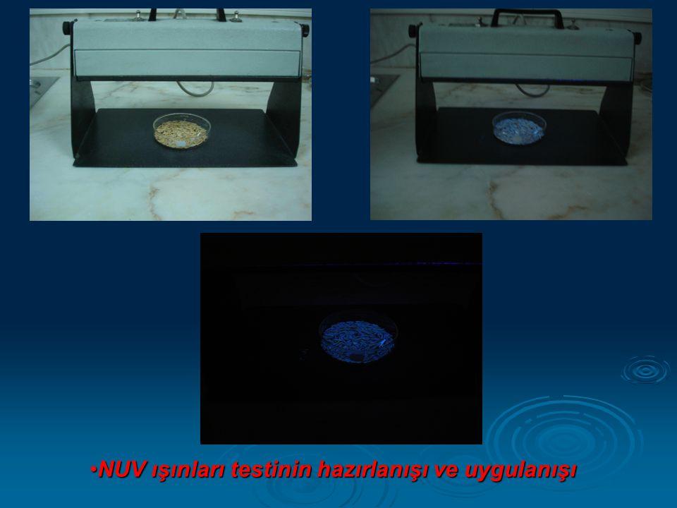 NUV ışınları testinin hazırlanışı ve uygulanışı