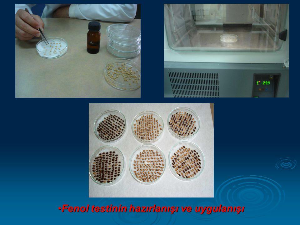 Fenol testinin hazırlanışı ve uygulanışı