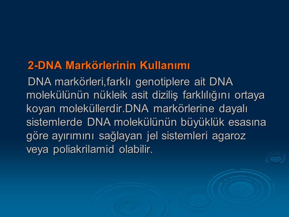 2-DNA Markörlerinin Kullanımı