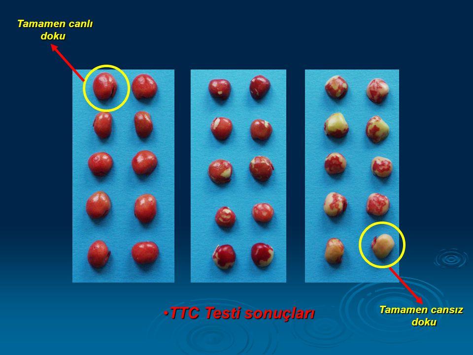 Tamamen canlı doku TTC Testi sonuçları Tamamen cansız doku