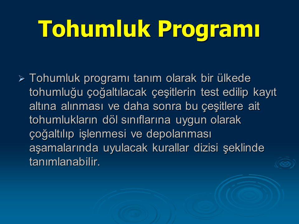 Tohumluk Programı