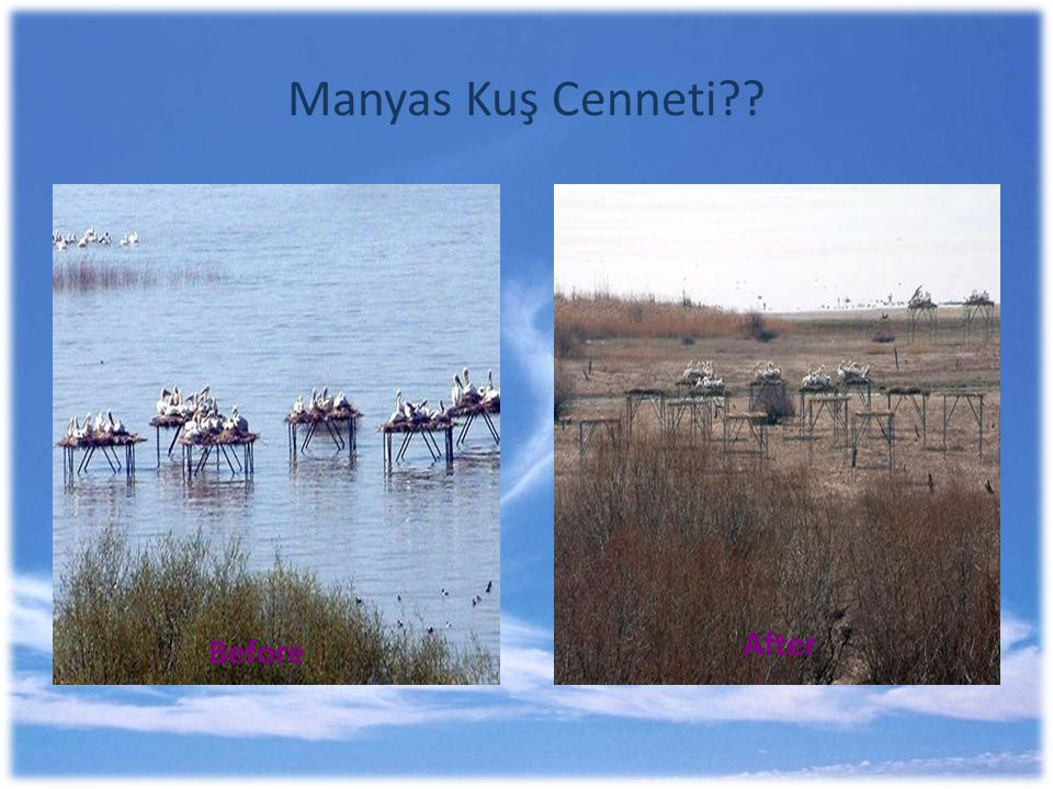 Manyas Kuş Cenneti After Before
