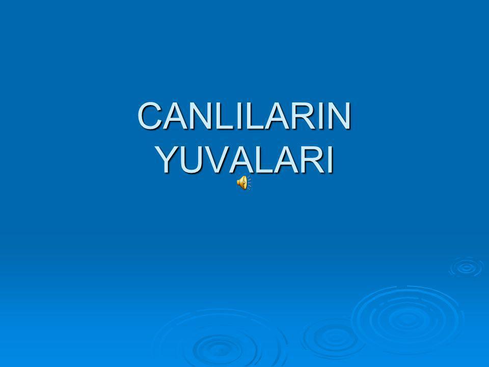 CANLILARIN YUVALARI