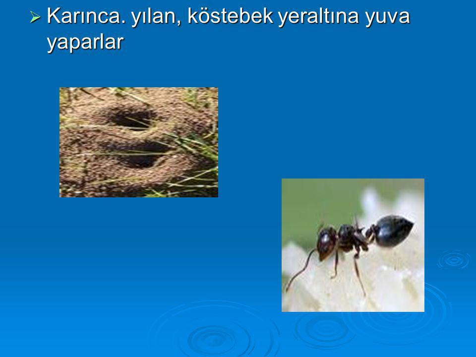Karınca. yılan, köstebek yeraltına yuva yaparlar