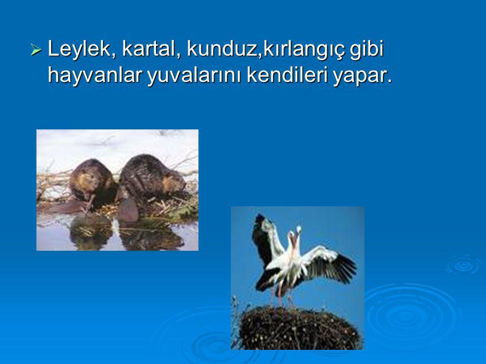 Leylek, kartal, kunduz,kırlangıç gibi hayvanlar yuvalarını kendileri yapar.