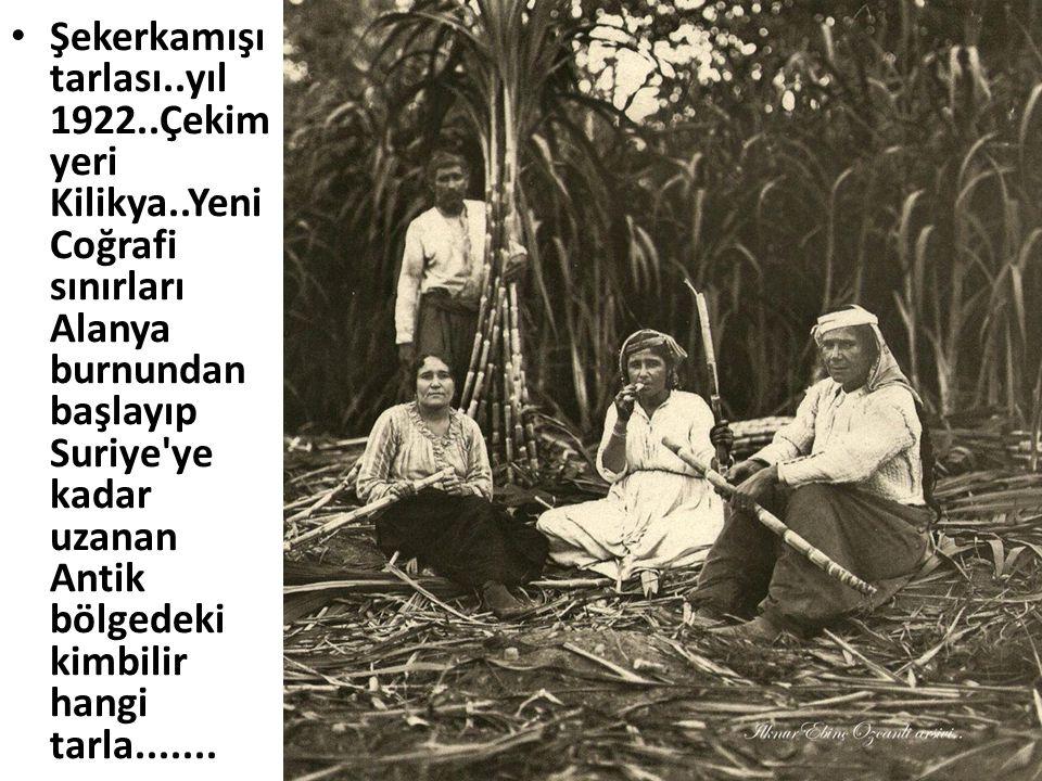 Şekerkamışı tarlası. yıl 1922. Çekim yeri Kilikya