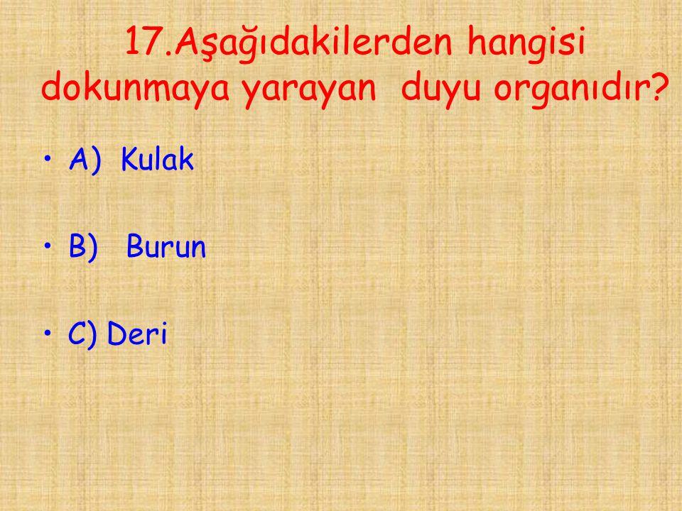 17.Aşağıdakilerden hangisi dokunmaya yarayan duyu organıdır
