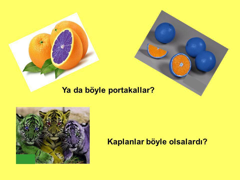 Ya da böyle portakallar