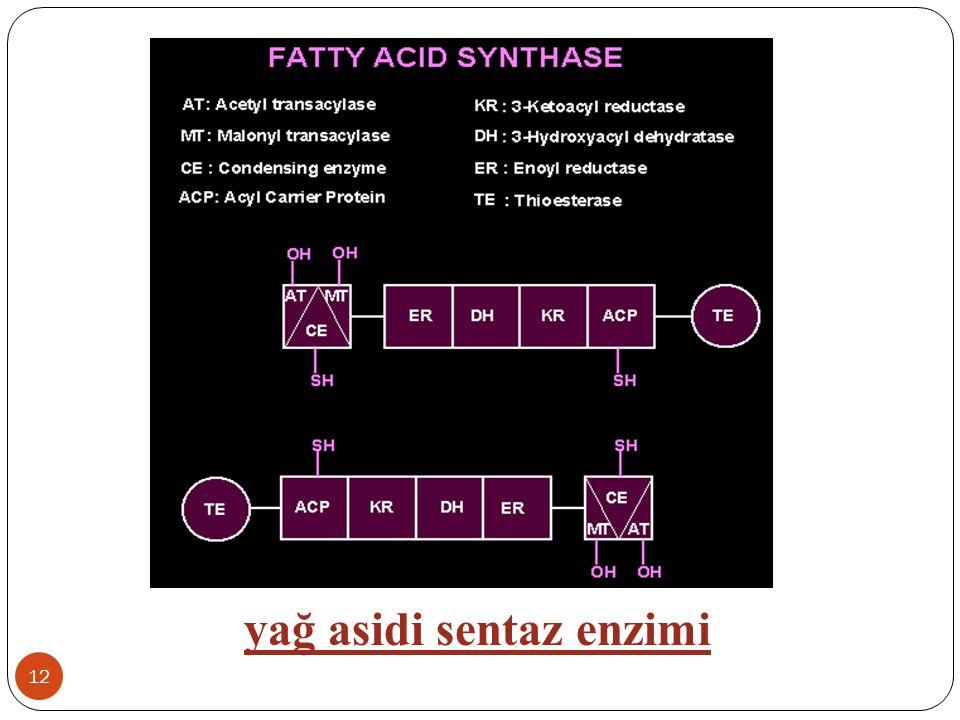 yağ asidi sentaz enzimi