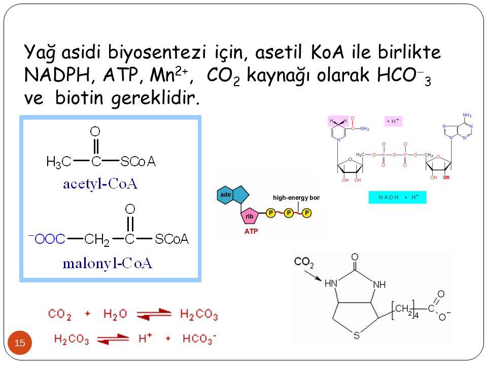 Yağ asidi biyosentezi için, asetil KoA ile birlikte NADPH, ATP, Mn2+, CO2 kaynağı olarak HCO3 ve biotin gereklidir.