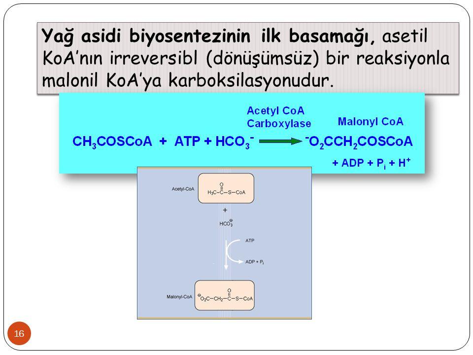 Yağ asidi biyosentezinin ilk basamağı, asetil KoA'nın irreversibl (dönüşümsüz) bir reaksiyonla malonil KoA'ya karboksilasyonudur.