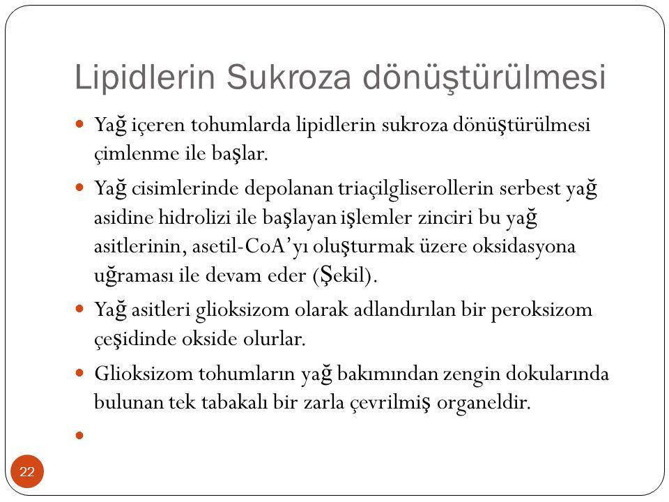 Lipidlerin Sukroza dönüştürülmesi
