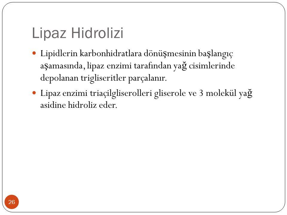 Lipaz Hidrolizi