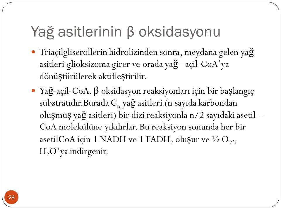 Yağ asitlerinin β oksidasyonu