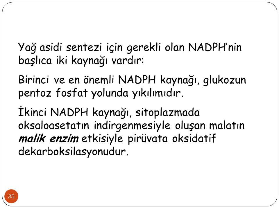 Yağ asidi sentezi için gerekli olan NADPH'nin başlıca iki kaynağı vardır: