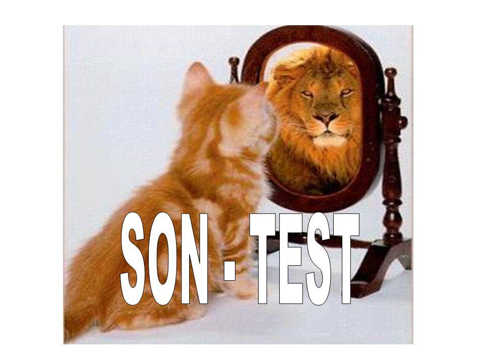 SON - TEST