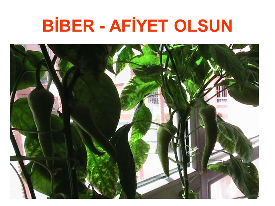 BİBER - AFİYET OLSUN