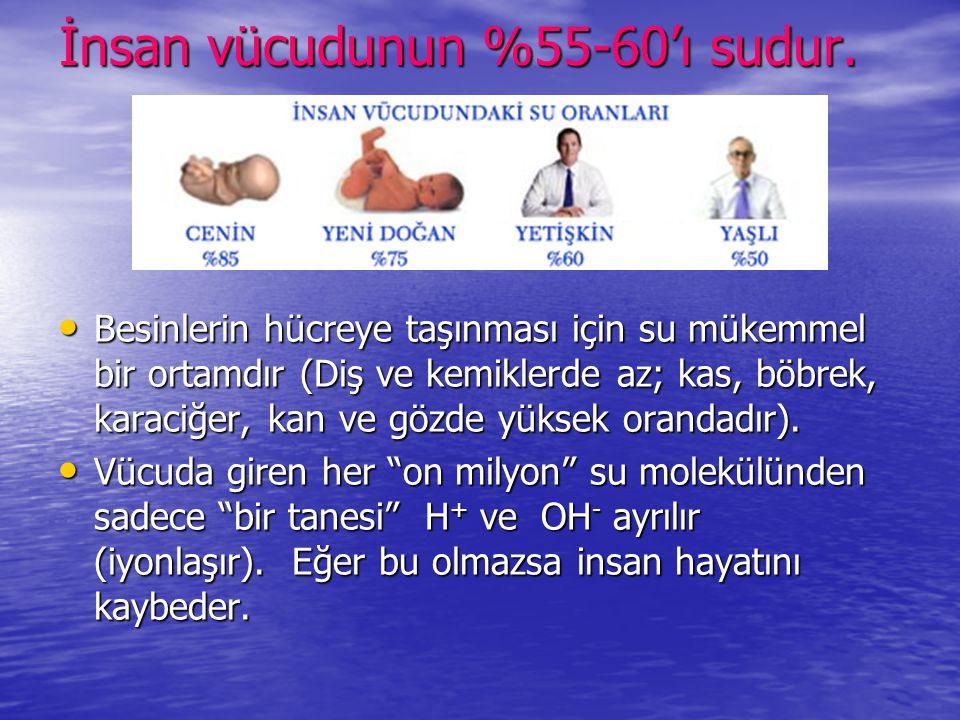 İnsan vücudunun %55-60'ı sudur.