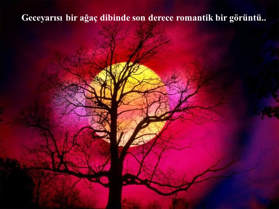 Geceyarısı bir ağaç dibinde son derece romantik bir görüntü..