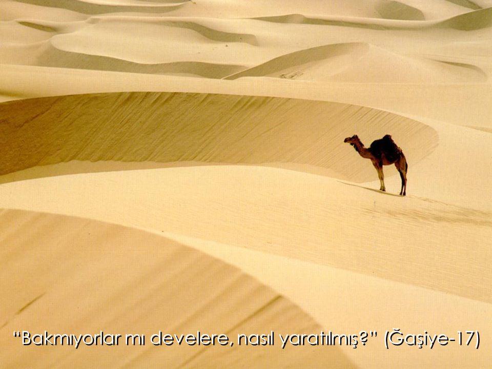 Bakmıyorlar mı develere, nasıl yaratılmış (Ğaşiye-17)