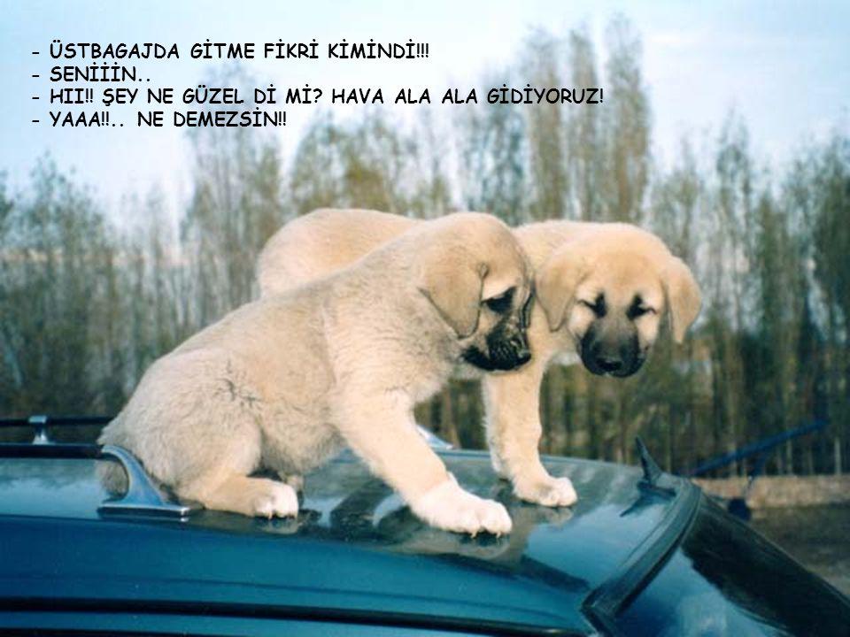 - ÜSTBAGAJDA GİTME FİKRİ KİMİNDİ!!!