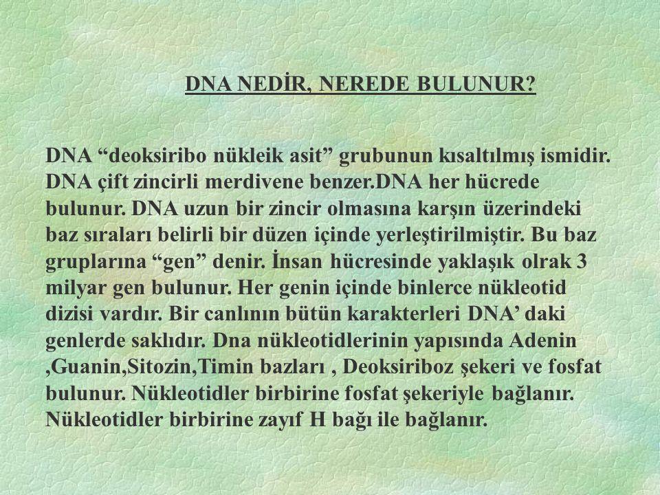 DNA NEDİR, NEREDE BULUNUR