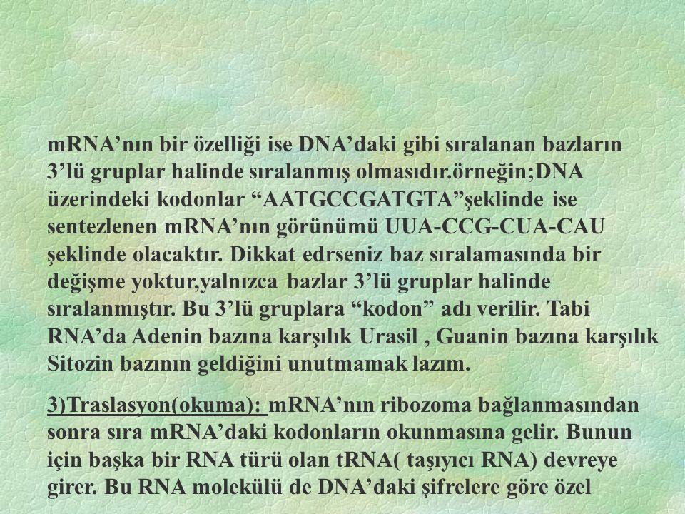mRNA'nın bir özelliği ise DNA'daki gibi sıralanan bazların 3'lü gruplar halinde sıralanmış olmasıdır.örneğin;DNA üzerindeki kodonlar AATGCCGATGTA şeklinde ise sentezlenen mRNA'nın görünümü UUA-CCG-CUA-CAU şeklinde olacaktır. Dikkat edrseniz baz sıralamasında bir değişme yoktur,yalnızca bazlar 3'lü gruplar halinde sıralanmıştır. Bu 3'lü gruplara kodon adı verilir. Tabi RNA'da Adenin bazına karşılık Urasil , Guanin bazına karşılık Sitozin bazının geldiğini unutmamak lazım.