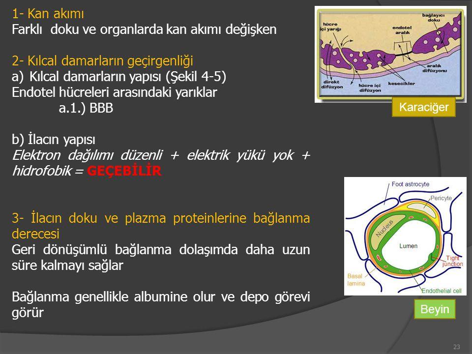 Farklı doku ve organlarda kan akımı değişken