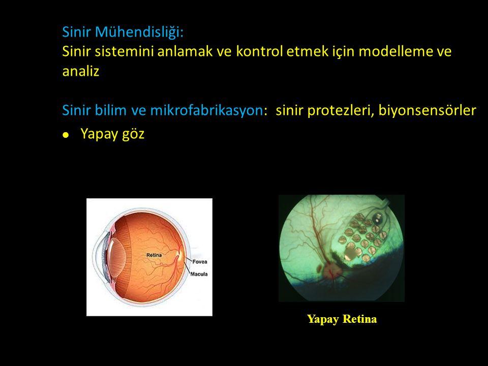 Sinir sistemini anlamak ve kontrol etmek için modelleme ve analiz