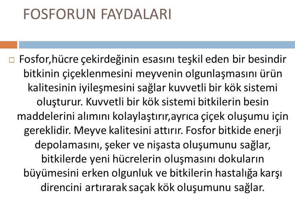 FOSFORUN FAYDALARI