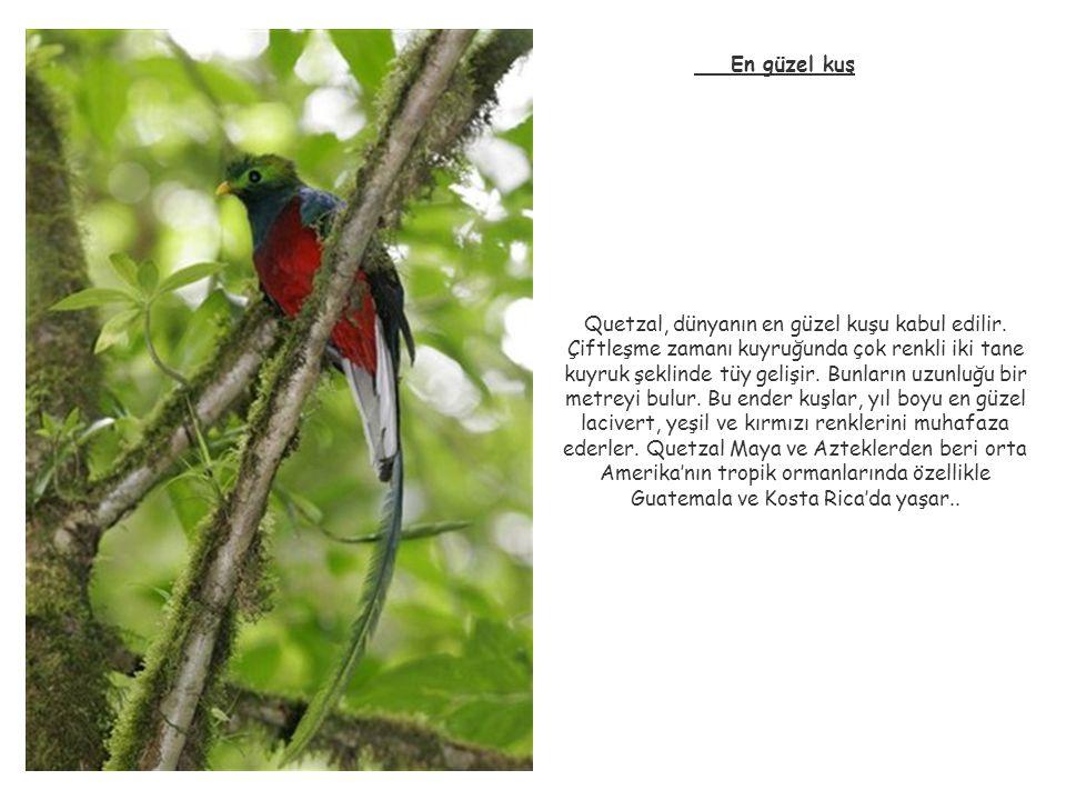 En güzel kuş