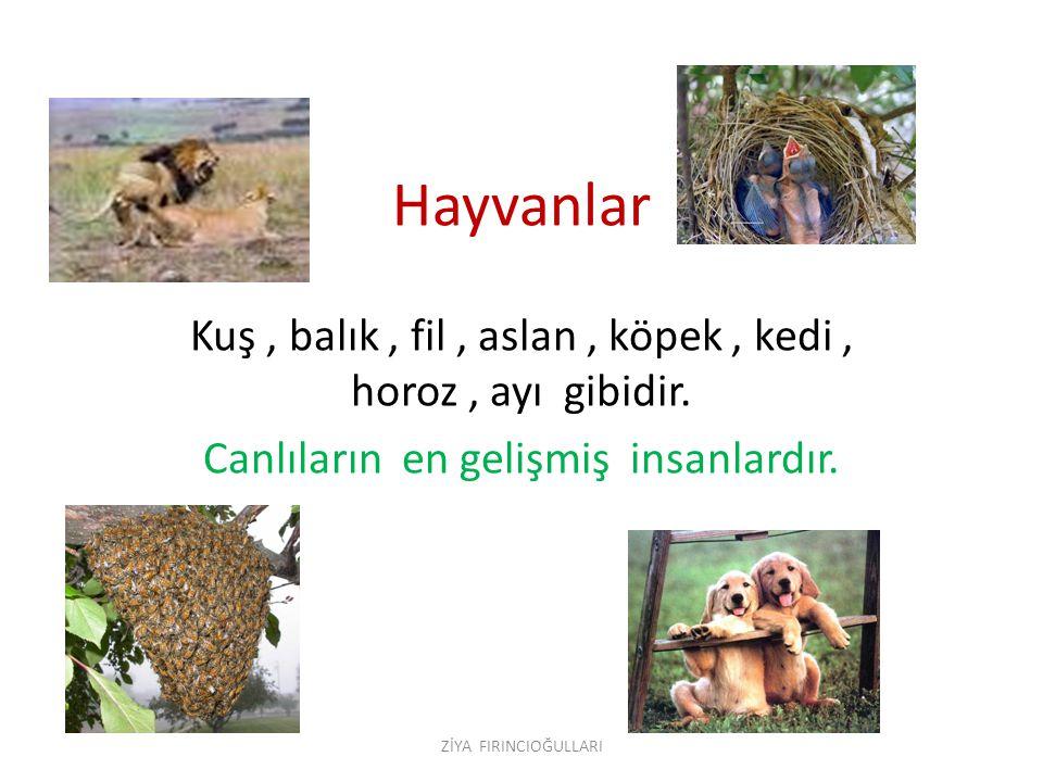 Hayvanlar Kuş , balık , fil , aslan , köpek , kedi , horoz , ayı gibidir. Canlıların en gelişmiş insanlardır.