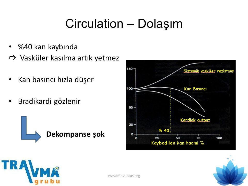 Circulation – Dolaşım %40 kan kaybında  Vasküler kasılma artık yetmez