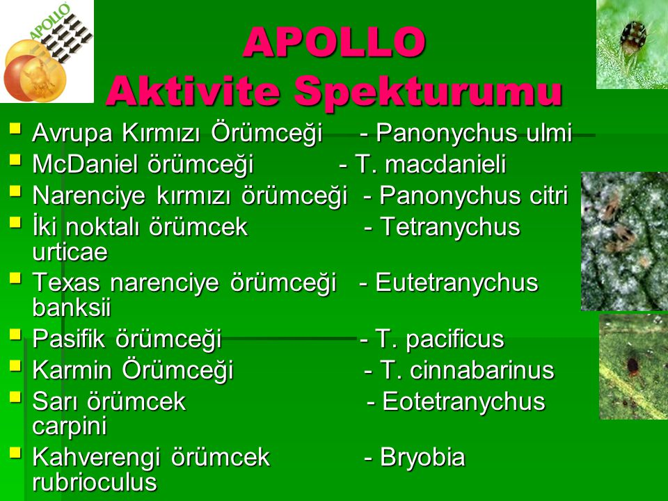 APOLLO Aktivite Spekturumu