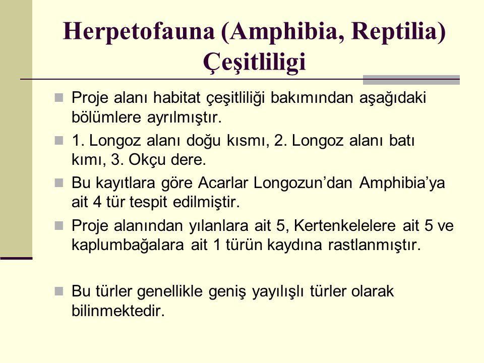 Herpetofauna (Amphibia, Reptilia) Çeşitliligi