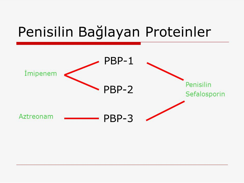 Penisilin Bağlayan Proteinler
