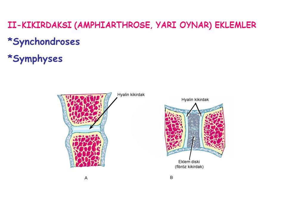 *Synchondroses *Symphyses