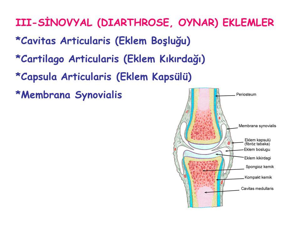 III-SİNOVYAL (DIARTHROSE, OYNAR) EKLEMLER