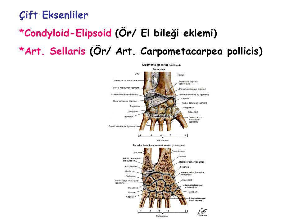 Çift Eksenliler *Condyloid-Elipsoid (Ör/ El bileği eklemi) *Art.
