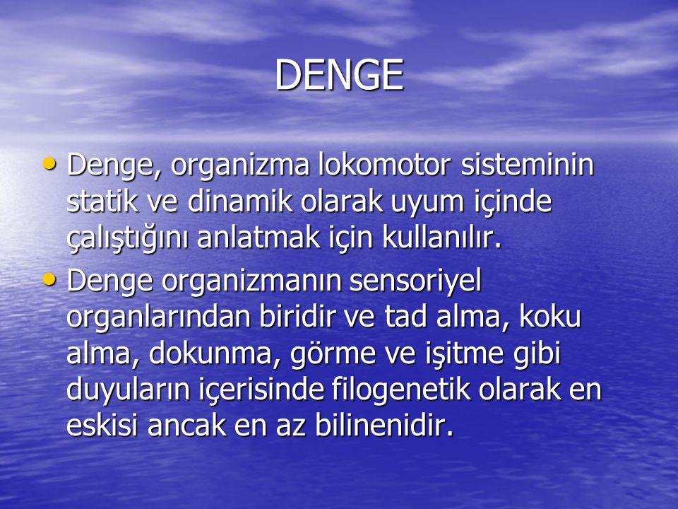 DENGE Denge, organizma lokomotor sisteminin statik ve dinamik olarak uyum içinde çalıştığını anlatmak için kullanılır.