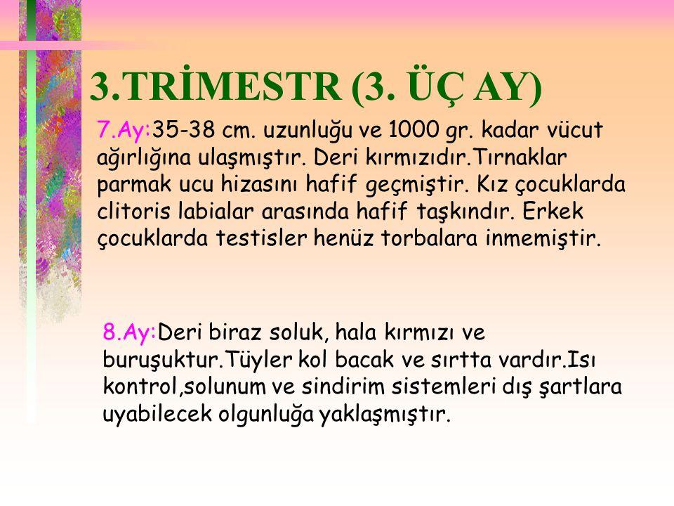 3.TRİMESTR (3. ÜÇ AY)