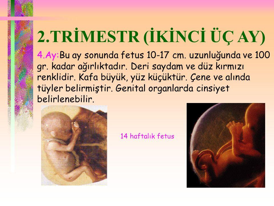 2.TRİMESTR (İKİNCİ ÜÇ AY)