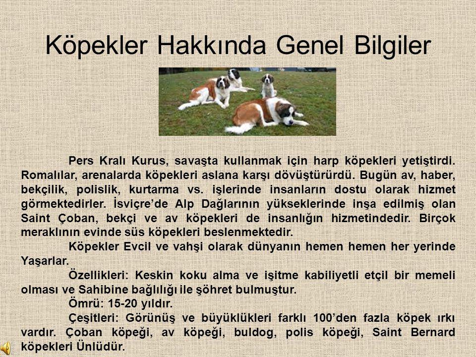 Köpekler Hakkında Genel Bilgiler
