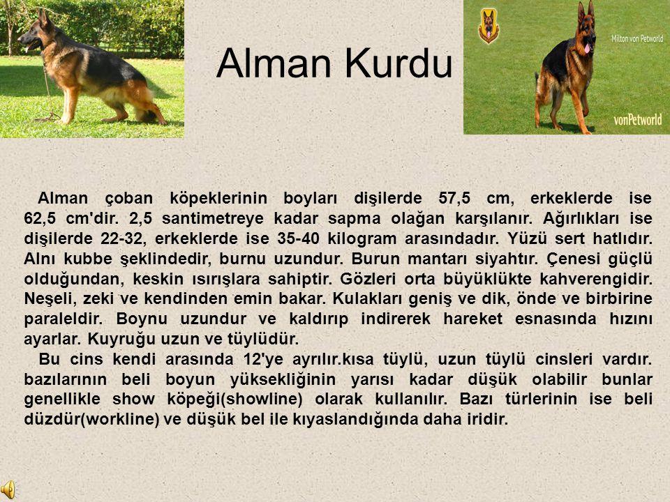 Alman Kurdu