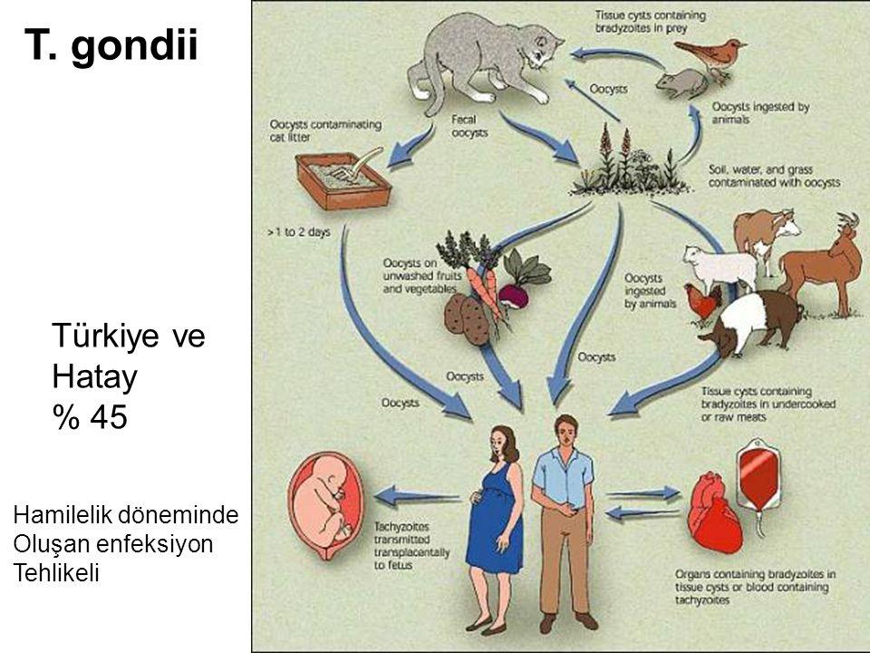 T. gondii Türkiye ve Hatay % 45 Hamilelik döneminde Oluşan enfeksiyon
